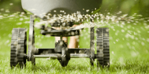 Surrey lawn care overseeding