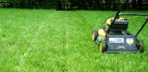 Top lawn care Surrey